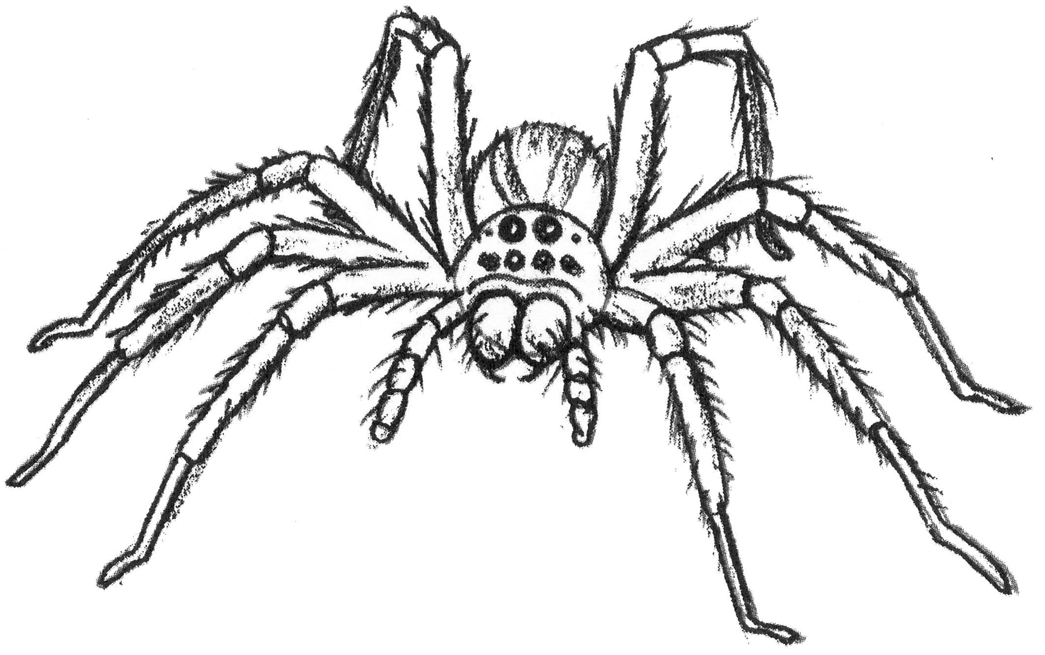 2017-insecte-illustration